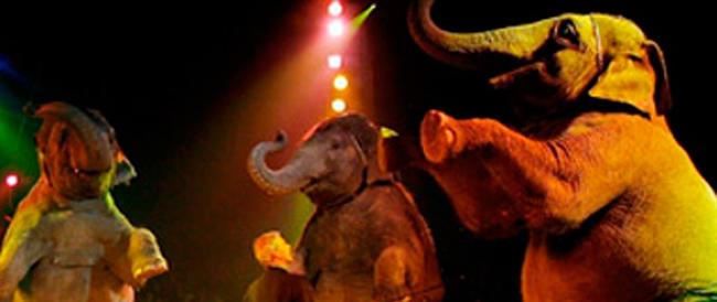 Brindisi, il sindaco animalista del Pd perde la battaglia contro il circo: elefanti e tigri possono esibirsi
