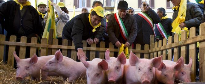 Liberi dal Porcellum, assediati dai maiali: sit-in suino alla Camera, ma la legge elettorale non c'entra…
