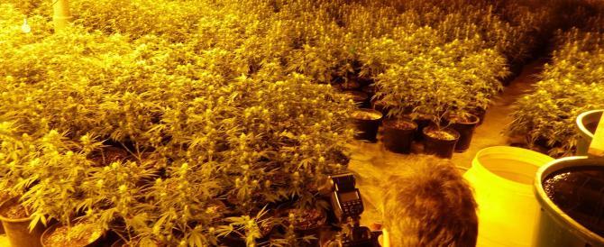 L'esperto: «La legalizzazione della cannabis non colpisce il narcotraffico»
