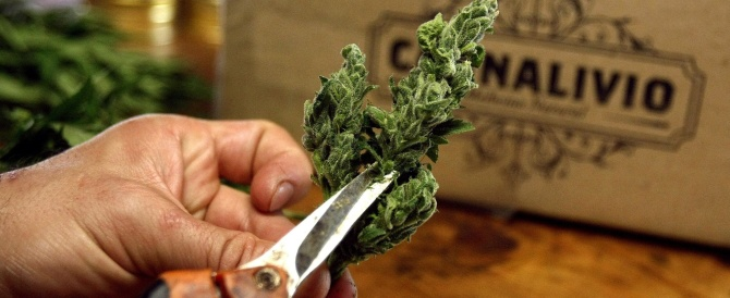 Nonno-pusher a Roma: coltivava marijuana in camera da letto