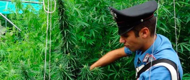 Coltivare marijuana in casa non sarà reato? È una bufala, ma a qualcuno piace dirlo