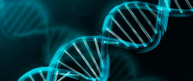Syn 3.0: un batterio sintetico con Dna minimo avvicina la vita artificiale