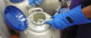 Scambio di embrioni, si va verso una battaglia legale tra le coppie