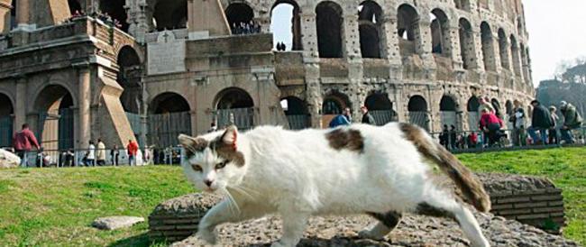 Nella notte europea dei musei, il Colosseo lasciato ai soliti… quattro gatti