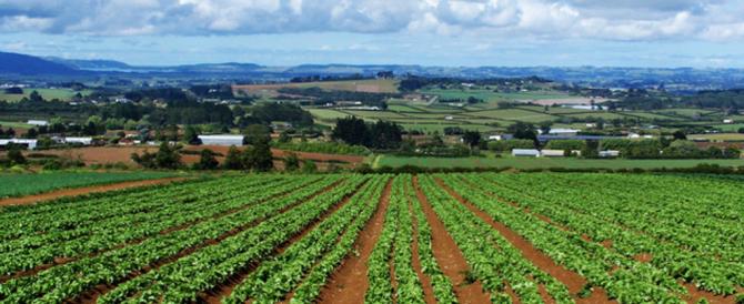 Gli agricoltori chiedono alla Ue di fare un passo indietro sul taglio ai fondi