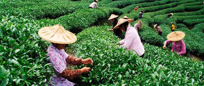 Cina, rivoluzione urbana in vista: i contadini potranno lasciare le campagne dove Mao li aveva confinati