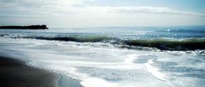"""""""Annamo"""" a Ostia beach … a fotografare gli squali"""