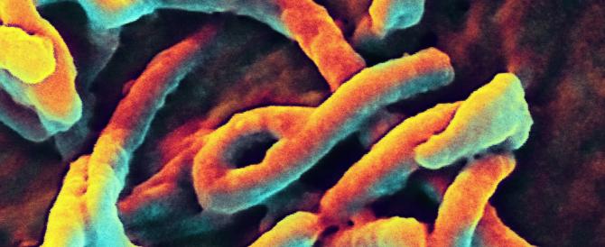 L'Onu: «L'ebola è una minaccia mondiale, stiamo perdendo la battaglia contro il virus»