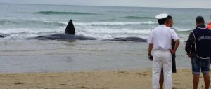 Dall'orso alle balene, l'Italia si mobilita per gli animali. Un po' meno per gli esseri umani