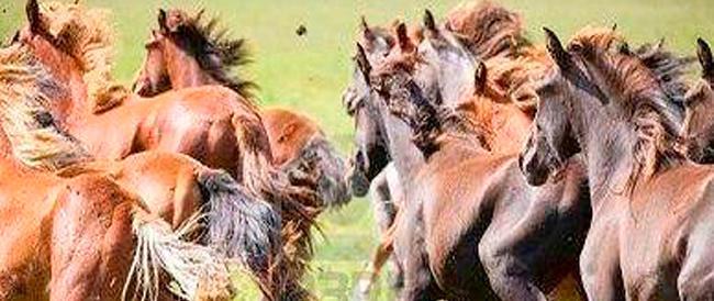 Maxi-truffa all'Ue e all'Italia, contributi da oltre un milione di euro per far pascolare 910 cavalli inesistenti