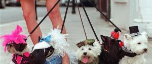 74 frustate a chi compra un cane. La tradizione islamica lo impone