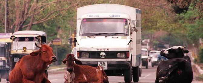 Obama a New Delhi: caccia le vacche sacre e rischia la maledizione