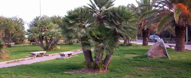 Agrigento, palme pubbliche nella sua villa: guai per l'ex presidente D'Orsi