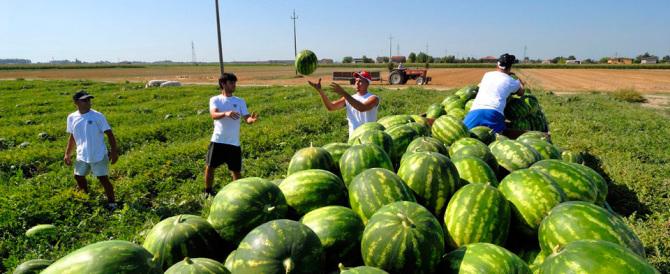 Imprenditore agricolo ha assunto fittiziamente 118 braccianti: denunciato