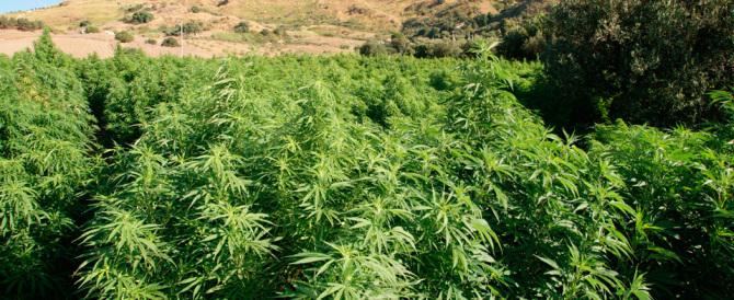 Ecco perché la scienza dice no alla legalizzazione della canna