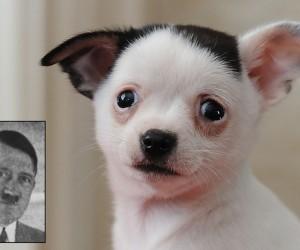 Ecco Adolph, il cane che assomiglia a Hitler