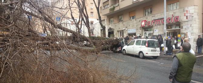 Piovono alberi. Nella Roma di Marino si rischia la vita per un po' di vento (video)