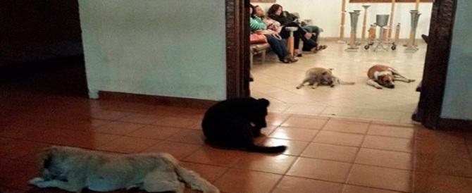 Messico, un gruppo di cani si presenta alla veglia funebre della benefattrice