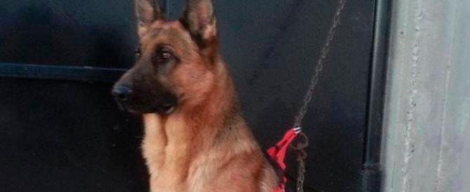 Tunisi, la folla si commuove per Akil, il cane poliziotto morto da eroe