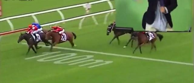 La corsa di cavalli e l'incredibile esultanza del giornalista. Guarda il video