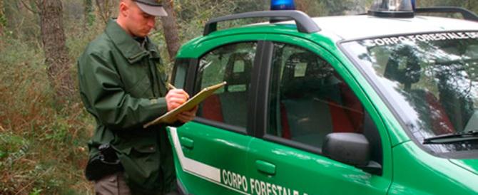 Allarme del capo dell'antimafia: guai a smantellare il Corpo forestale