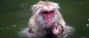 Allo zoo il macaco si chiama Charlotte, come la royal baby. È polemica