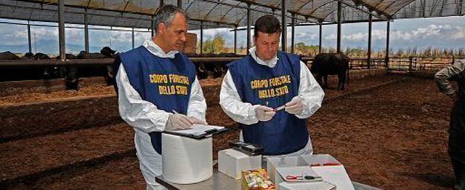 Mozzarelle di bufala non tracciabili: sequestro da 6 quintali nel senese