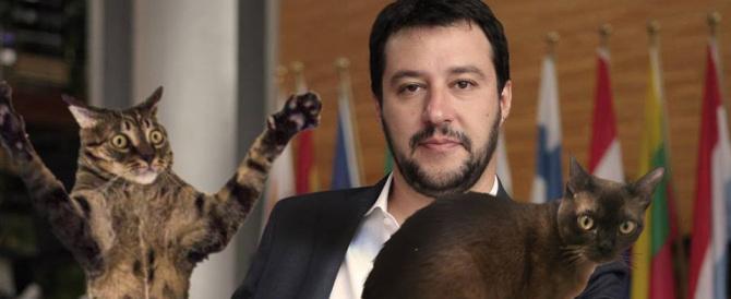 """La bacheca Fb di Salvini invasa da gattini: è la protesta dei """"compagni""""…"""