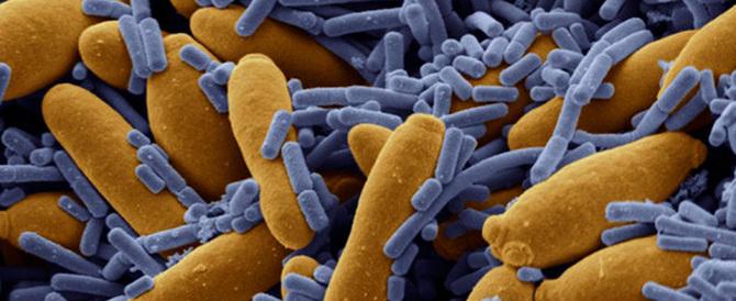 Studio del Cnr: così l'intestino umano si adatta a inquinanti e ad antibiotici