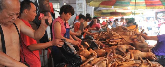 """Carne di cane a un """"festival"""" cinese. Un mercato macabro: ecco perché"""