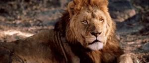 Cecil, il leone ammazzato dal dentista americano in cerca di emozioni forti