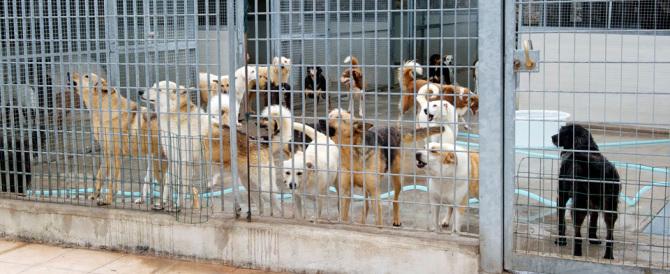 Canile lager scoperto vicino Milano: cuccioli al buio senza acqua né cibo