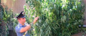 La cannabis è devastante: s'incrementa di pareri l'allarme degli esperti