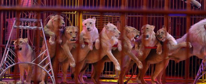 Via leoni e tigri dal circo: la Catalogna accontenta gli animalisti