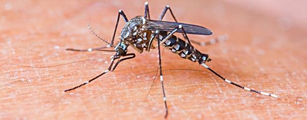 La zanzara? Un feroce predatore. Ecco perché non possiamo sfuggirle
