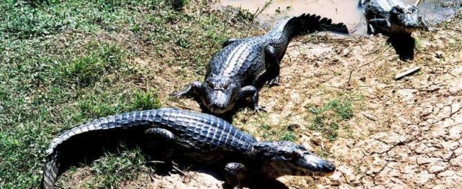India, attaccata da un coccodrillo casalinga si difende a mestolate
