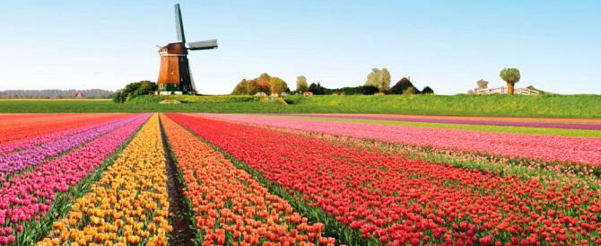 Le mani dei boss anche sul business dei fiori olandesi e della cioccolata