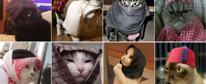 Tanti gattini su Twitter per esprimere solidarietà agli agenti anti-terrorismo