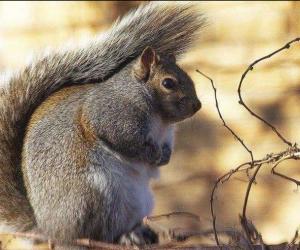 Scoiattoli ciccioni: così gli animaletti si preparano per l'inverno