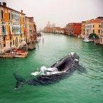 La foto rappresenta una balena a Venezia; si tratta di due diverse foto sovrapposte con photoshop. E' una delle migliori bufale dell'anno. (Foto Twitter)