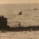 """Questo è un falso d'epoca che risale alla Seconda guerra mondiale, ma """"socializzato"""" nei mesi scorsi. Non esistono in natura squali di quelle dimensioni... (Foto Twitter)"""