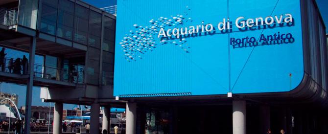Acquario di Genova, dopo il calo dovuto ad Expo tornano i visitatori