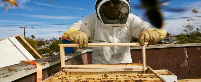 Le api arrivano sul balcone di casa: miele a volontà in tutte le città