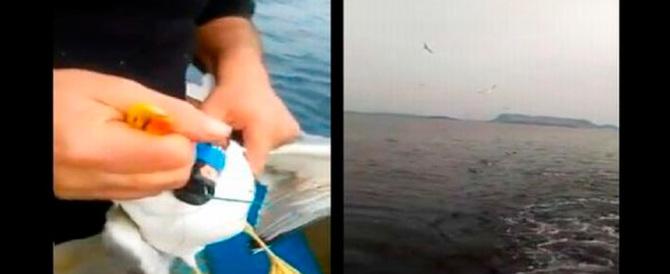 Nuoro, Lipu parte civile contro i due pescatori che uccisero un gabbiano