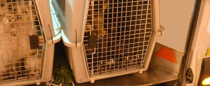 Milano, sventato un traffico di animali: arrestati un romeno e un moldavo