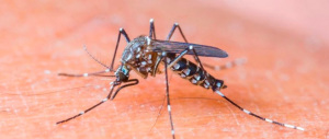 Zanzare, ecco i cibi da mangiare per tenere lontani questi fastidiosi insetti