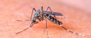 Virus Zika, allarme in Brasile: quattromila i casi di microcefalia nei bambini