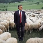 In mezzo alle pecore? (Foto Instagram)