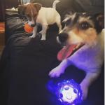 """I due cani di Donatella, Audrey e il suo """"fratellino"""". (Foto Instagram)"""