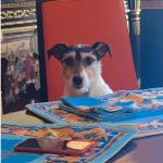 Il cane Audrey, decisamente un quattrozampe fortunato. (Foto Instagram)